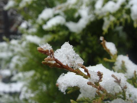 木々に積もった雪