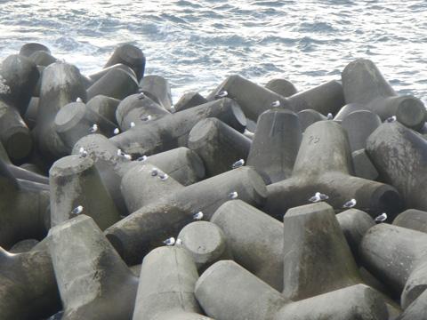 テトラポットの海鳥