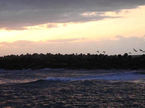 飛び立つ鳥と夕焼け