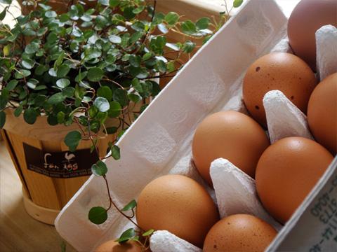 渡辺鶏園様の卵1