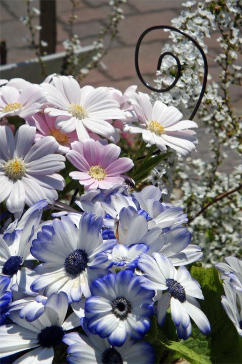 長野駅前の花1