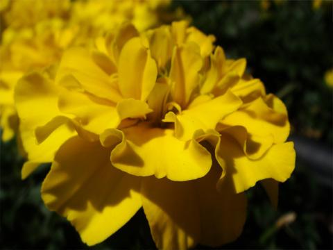 長野駅前の花2