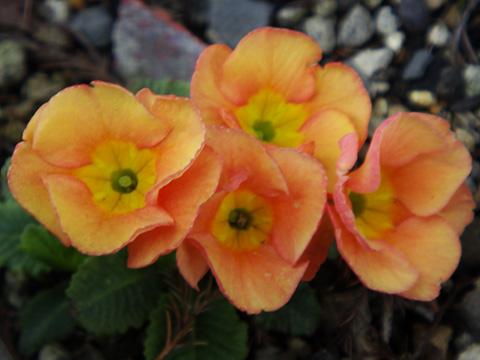 きれいなオレンジの花