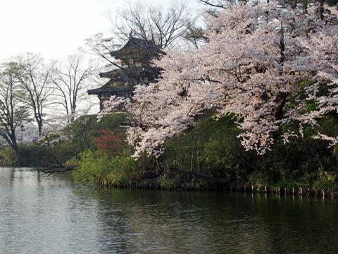 高田のお城と桜
