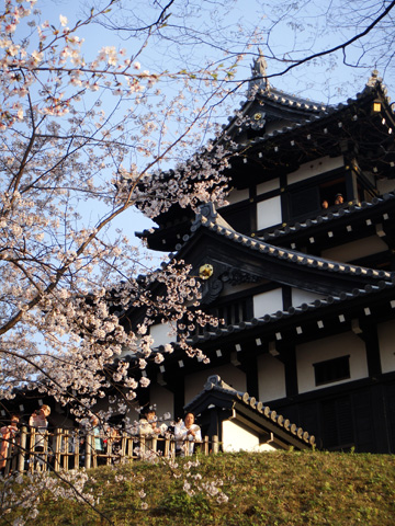 高田のお城と桜2