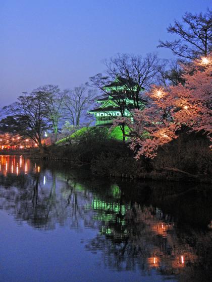 高田公園の夜桜2