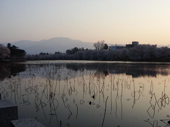 蓮の池と夕焼け