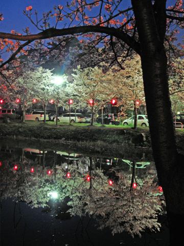 お堀にうつる夜桜