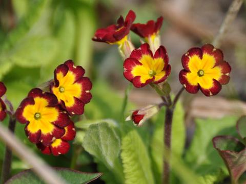 翡翠峡の小さな花2