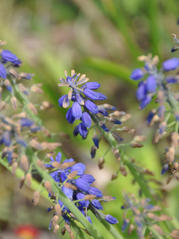 翡翠峡の小さな花3