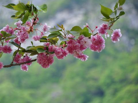 翡翠峡の花1