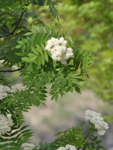 翡翠峡の花2