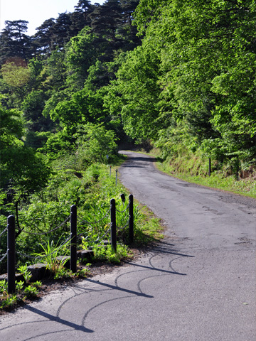 春日山城跡への道