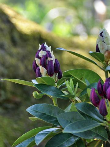 林泉寺の花1