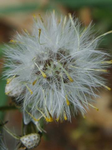 塩の道・古道の花4