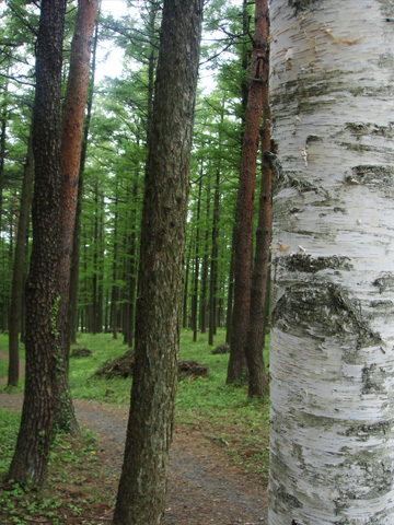 塩の道の木々
