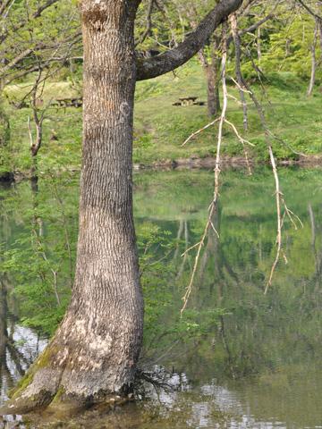 高浪の池から伸びる木々