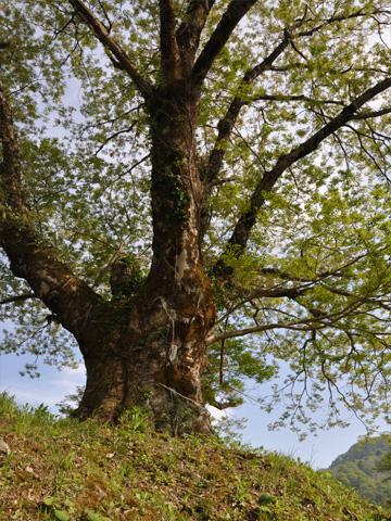 生命力あふれる木