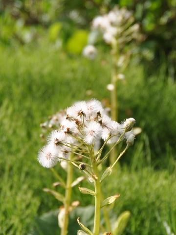 高浪の池の花1