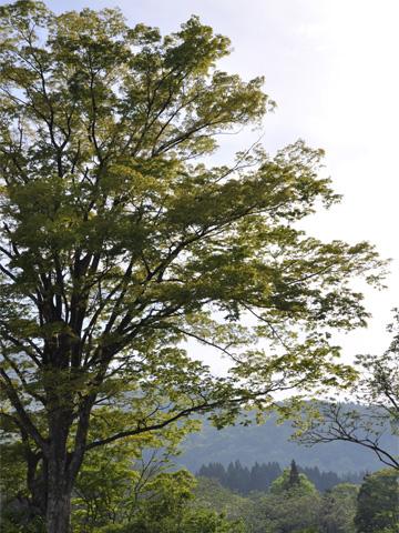 高浪の池駐車場の木