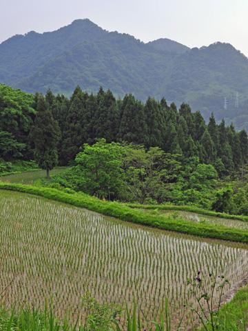 能生・新道山付近の田んぼ