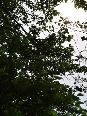 能生・新道山公園、繁る緑
