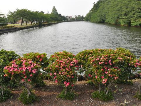 高田公園・お堀