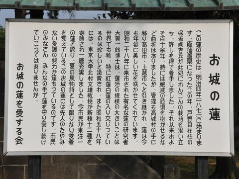 高田公園・蓮の説明