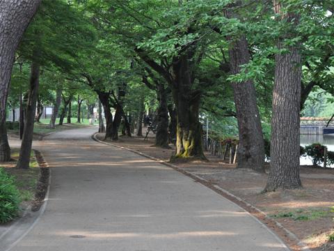 高田公園・桜並木道