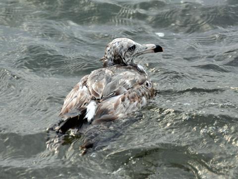 弁天岩の鳥3