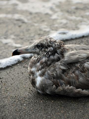 弁天岩の鳥4