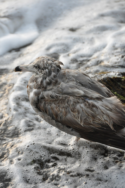 弁天岩の鳥5