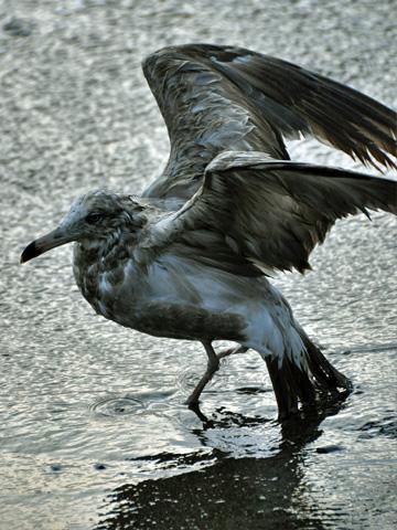 弁天岩の鳥6
