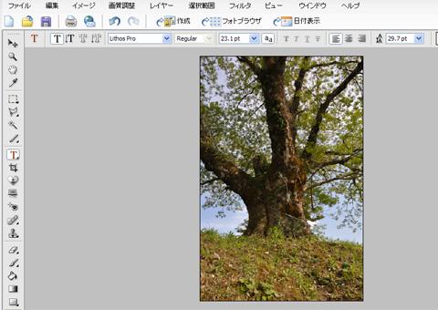 木の画像をフォトショップで開く