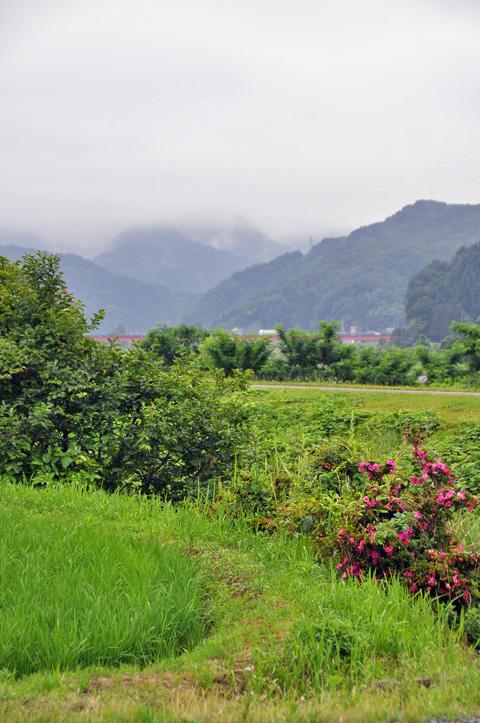 糸魚川の田んぼと山々