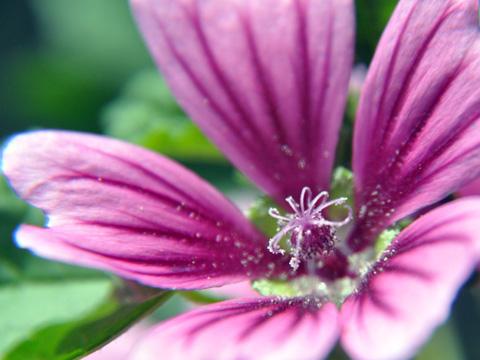 エキカモで見た花1