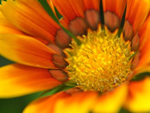 エキカモで見た花2