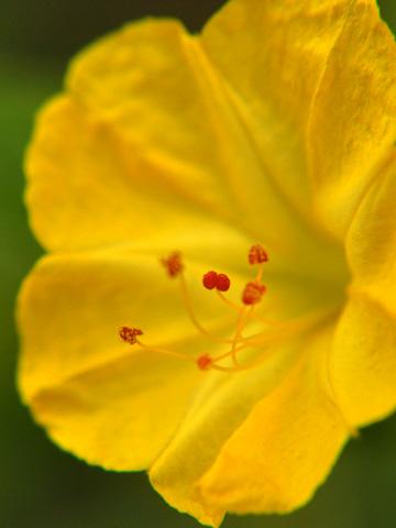 エキカモで見た花4