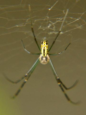 エキカモで見た蜘蛛