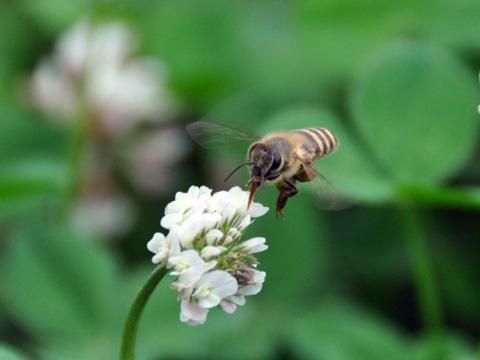高田公園の蜂1