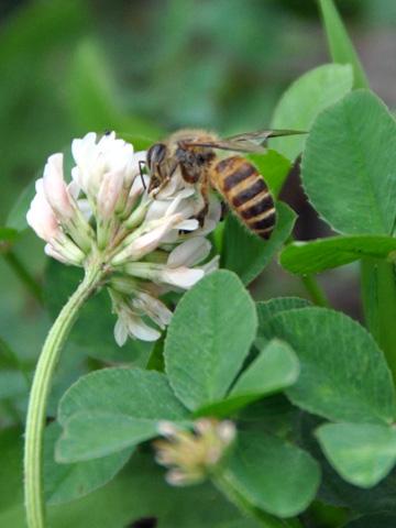 高田公園の蜂2