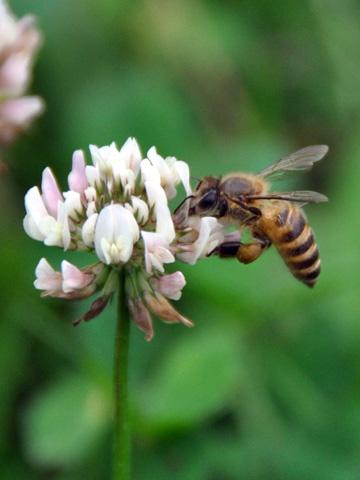 高田公園の蜂3