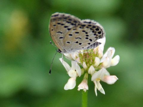高田公園の蝶1
