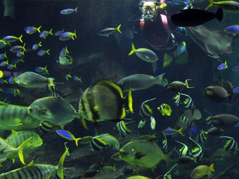 上越市立水族博物館7