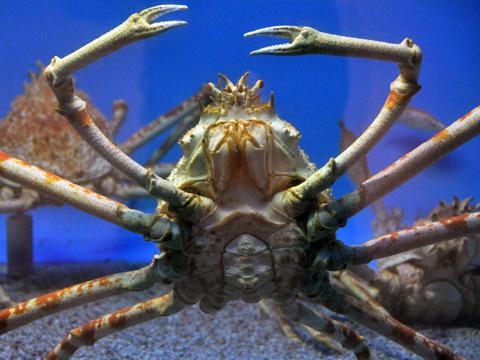 上越市立水族博物館4