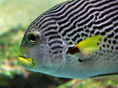 上越市立水族博物館6