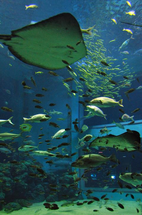 上越市立水族博物館2