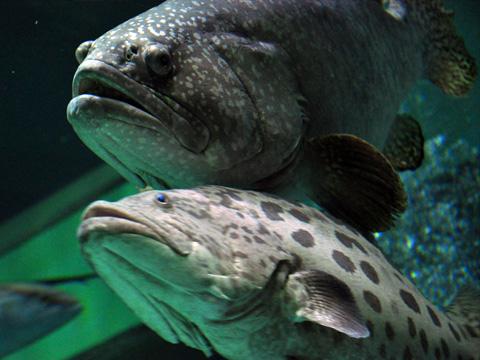 上越市立水族博物館5