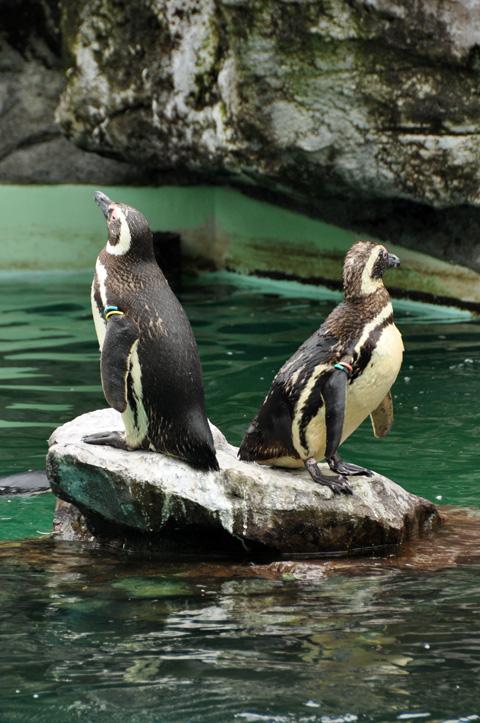上越市立水族博物館8