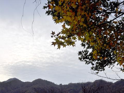 秋の根知3